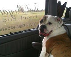 Duke-in-Taxi