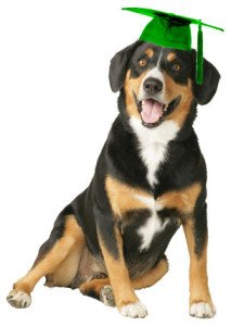 Dog-with-grad-cap