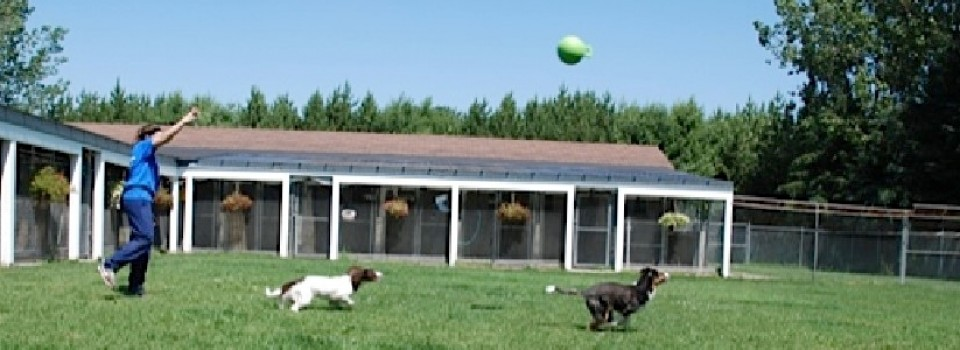 5 Acres of Off Leash Play, 30 Acres of Walking Trails!