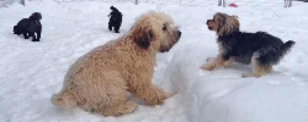 Dog Boarding, Cat Boarding and Dog Daycare Guests from January 13-19/ 2014