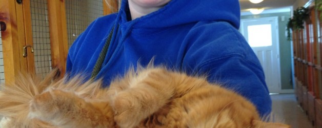 Some food for thought – Cat Boarding near me