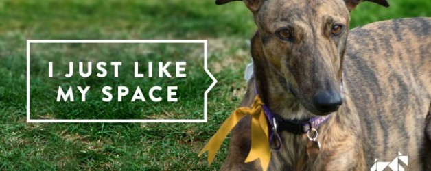 My Dog Just Needs Some Space – Yellow Dog Project