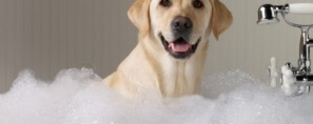 How often should I bath my dog ?