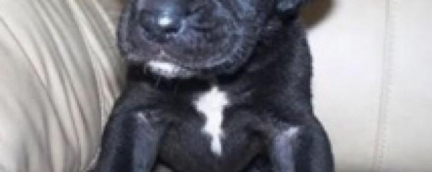 Choosing a Dog: Step Three – You want a Puppy