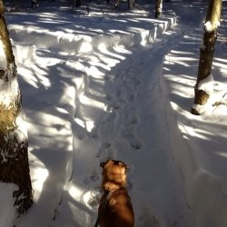 pug in woods