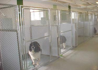 What Is The Difference Between Boarding Kennels And Dog