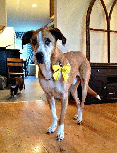 yellow-ribbon-dog-meaning | Royal Pets Hotel & Spa