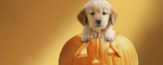 Halloween Safety Tips for Your Pets from a Safe and Caring Pet Resort
